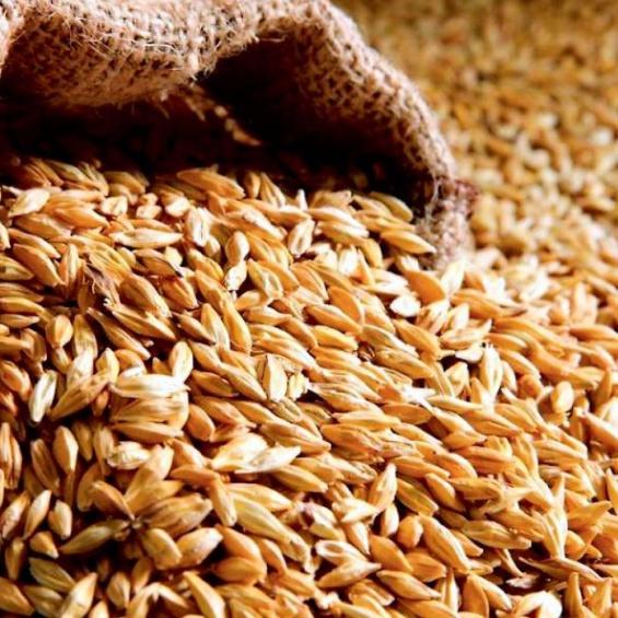Экспорт сельскохозяйственных культур через порт